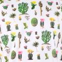 AO Cactus